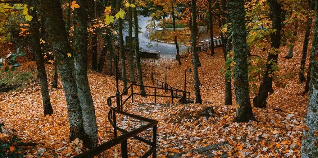 L'Altopiano più sportivo d'Abruzzo, Mi piace passare le vacanze in un bosco