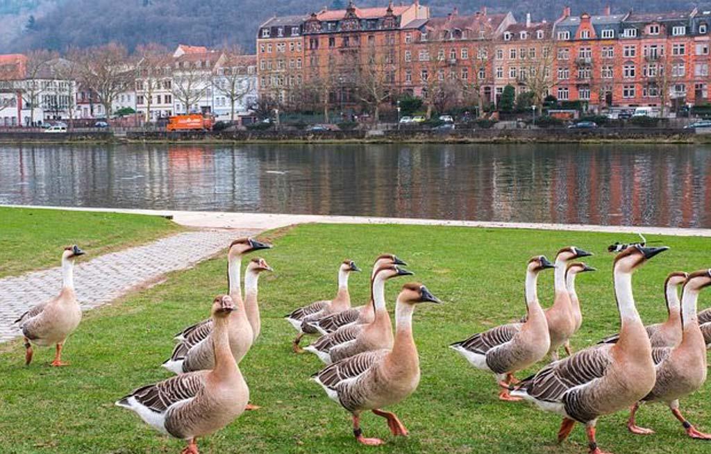 è bello vivere o studiare ad Heidelberg