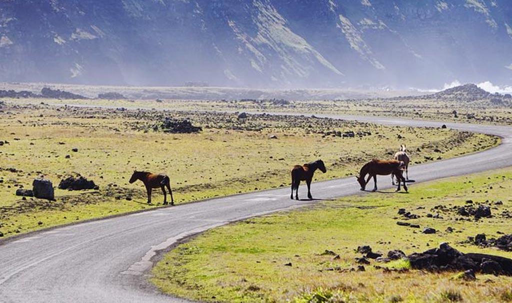 Fuori il centro tante pecore e cavalli selvaggi con le criniere al vento