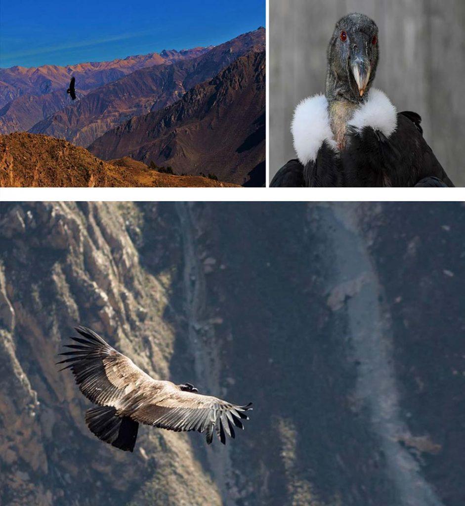 il volo del condor, lento, solenne, maestoso