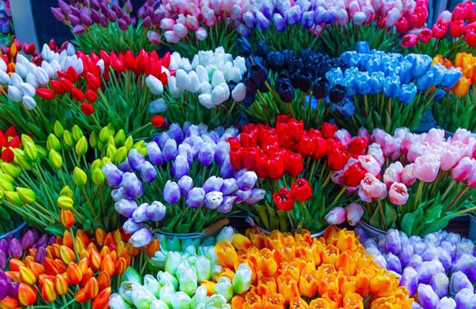 Amsterdam colorata come i tulipani