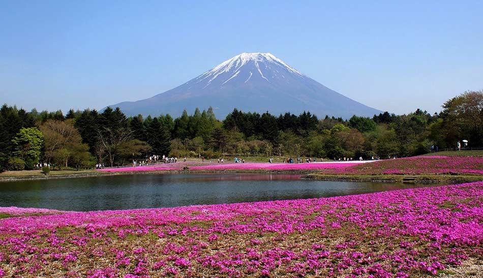 La natura del Fuji