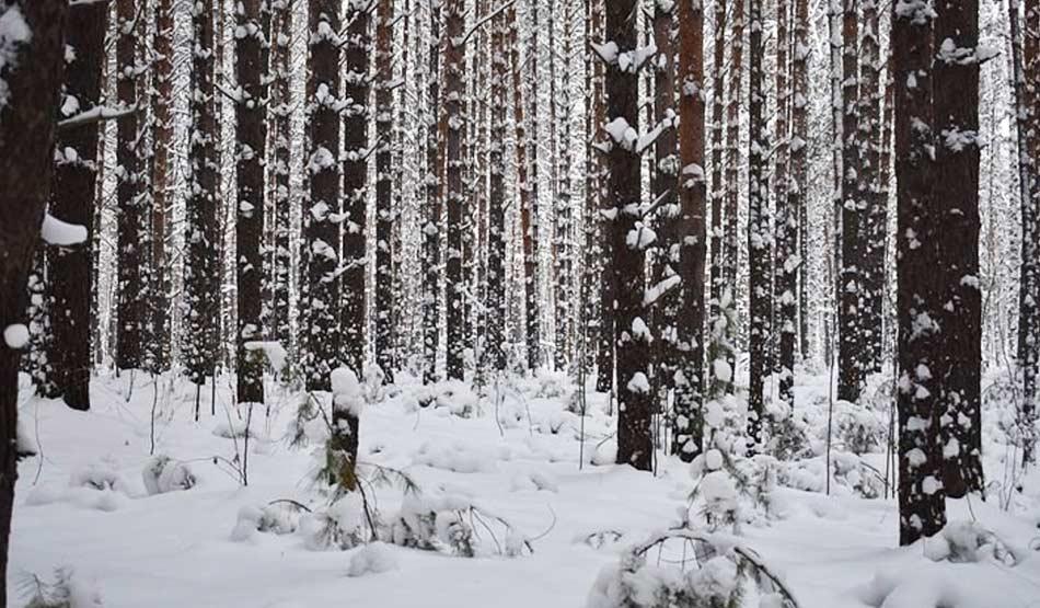 Per otto mesi l'anno la neve sigilla il terreno