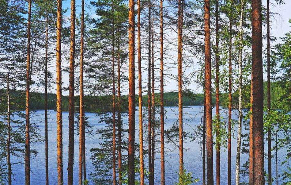 la scoperta meravigliosa dei mille laghi e mille boschi della Finlandia