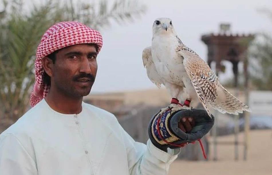 doni preferiti degli emiri, ovvero i falconi da caccia
