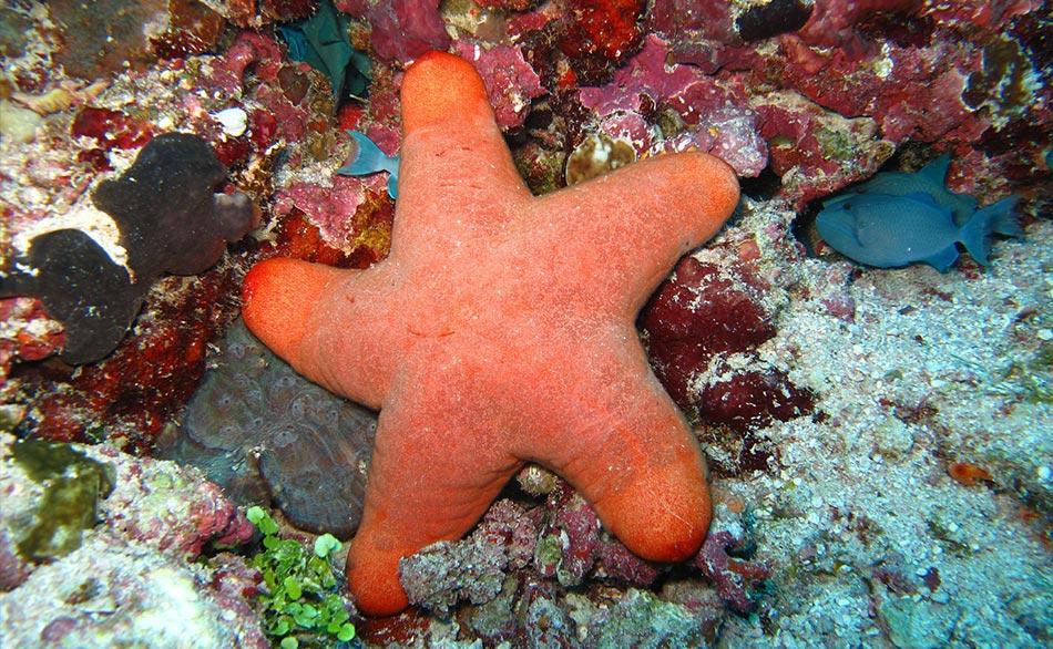 pieno di milioni di specie di pesci di tutti i tipi, piccoli, medi, grandi, immensi, coloratissimi