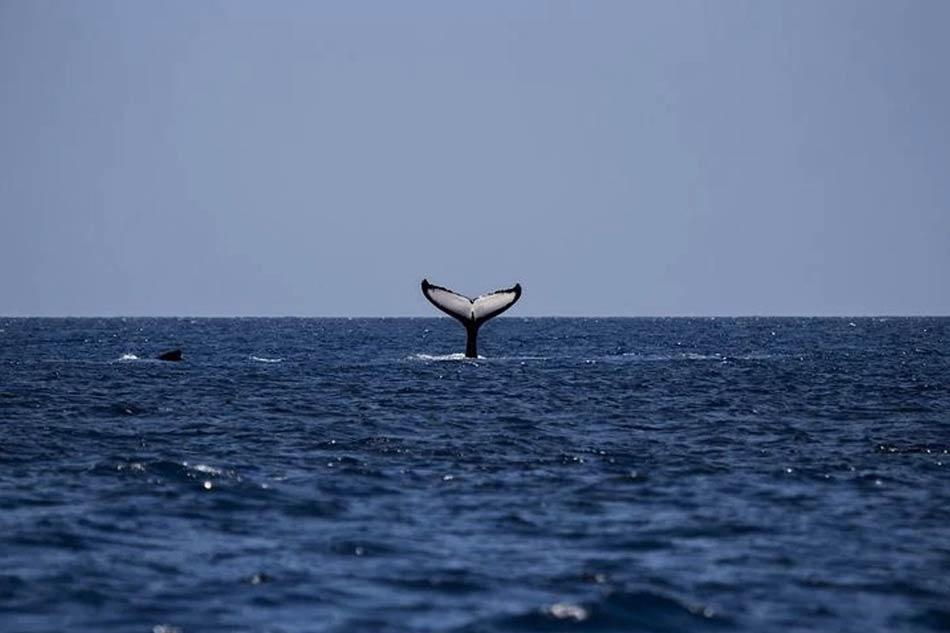 Qualche anno fa avendo poco o nulla in tasca e niente in particolare che riuscisse a interessarmi a terra ...Melville, Moby Dick
