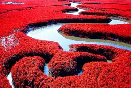 Cina, Spiaggia Rossa a Panjin