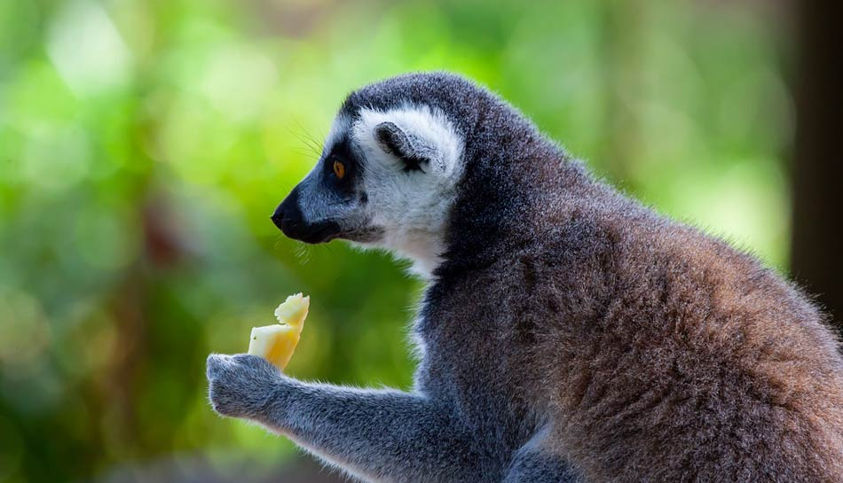 abbiamo visitato l'isola dei Lemuri