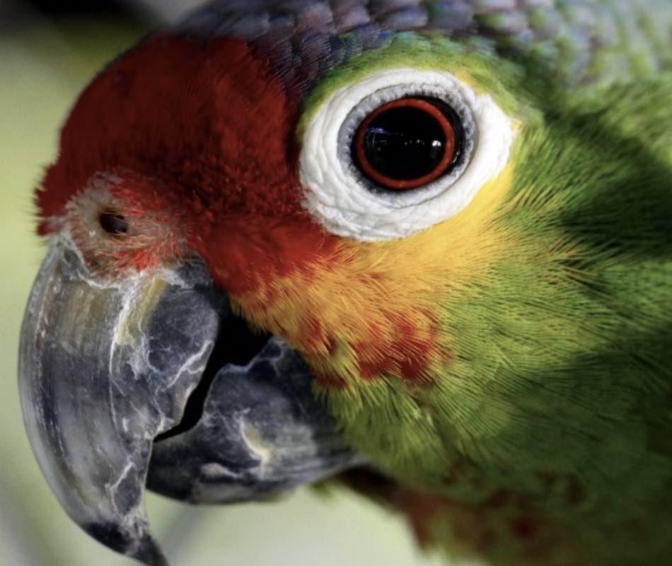 mettono allegria o paura, gli uccelli colorati tra gli alberi