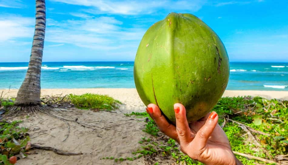 un luogo unico al mondo grazie al fatto che solo qui cresce il coco de mer