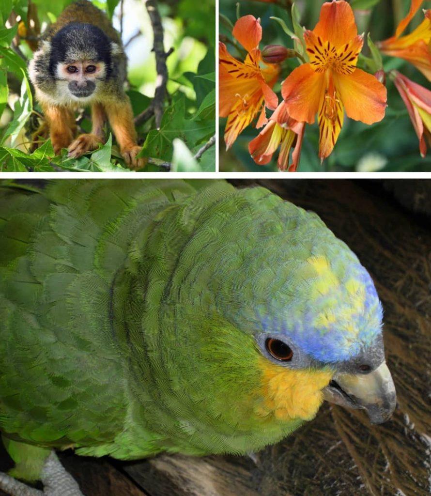 un viaggio lento sul fiume regala comunque emozioni incredibili, viste di scimmie, fiori, pappagalli