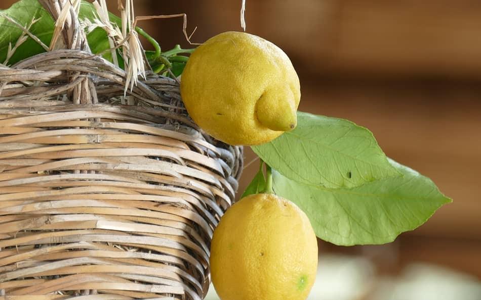 solo con i limoni di Sorrento si ottiene il sapore originale e inconfondibile