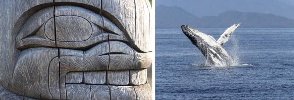 Le orche sono animali fortemente sociali e la caccia coinvolge tutto il gruppo