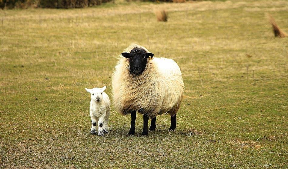 Silenzio, vento, greggi di pecore e la scoperta finale di Allihies