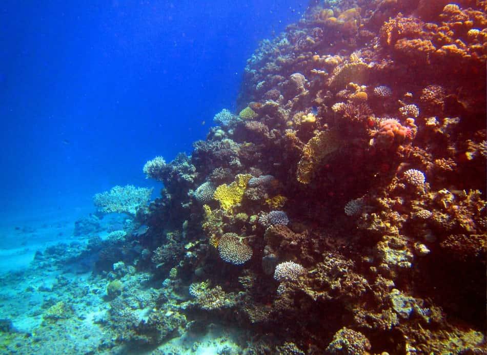 tutte le bellezze e le peculiarità della barriera corallina!