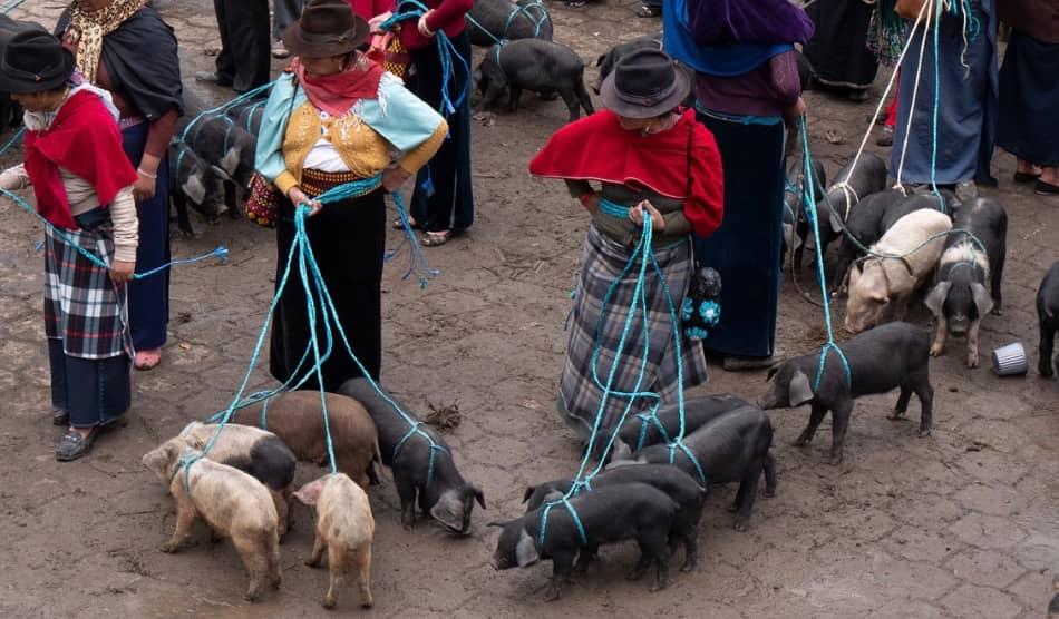 nelle taverne di Riobamba si divorano salsicce e maiali fritti col mais