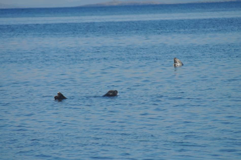 un pic-nic nella baia delle foche, un tentativo di bagno nella baia più calda