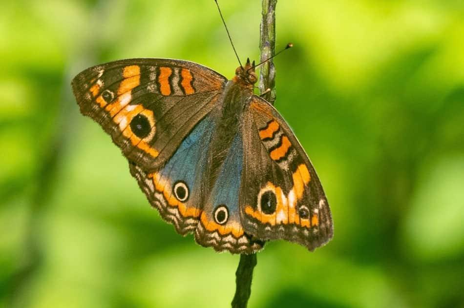 sa tutti i nomi delle farfalle