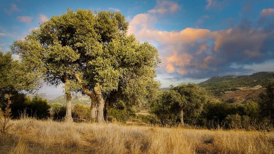 incontrare i prodotti di questa terra, i vini e l'olio extra-vergine d'oliva