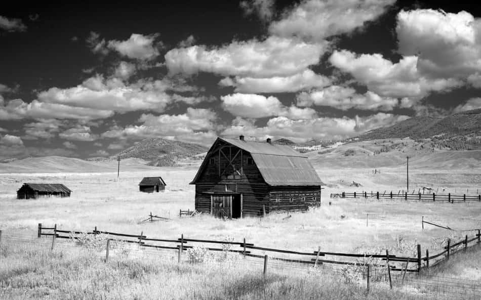 Lassù nel Montana i cavalli lo capiscono se i cow boy sono poco sereni, poco pazienti
