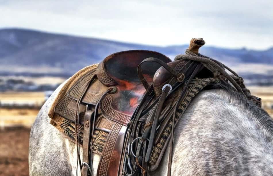 Ma torniamo ai cavalli bellissimi e selvaggi, vera icona dei ranch