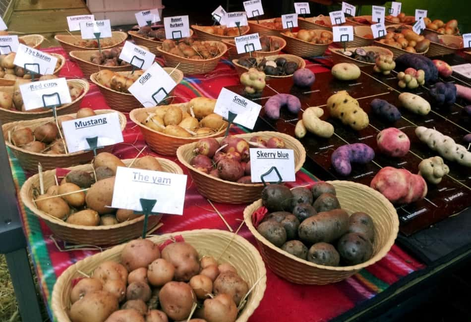 Le patate nell'isola verde sono protagoniste di tanti piatti