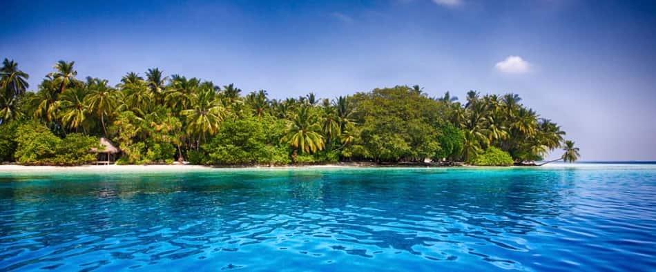 il valore di un'isola si calcola per il numero di palme da cocco presenti