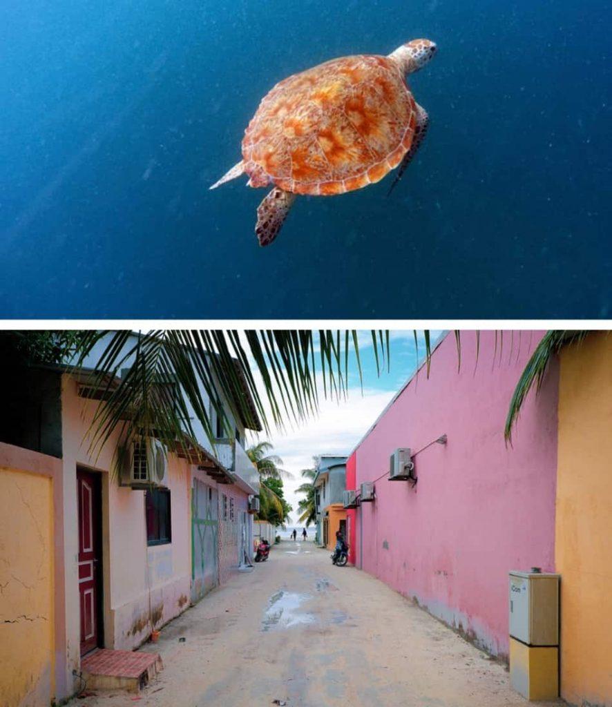 Su una tartaruga libera che va verso gli abissi, su una via povera di un villaggio, su un orizzonte marino