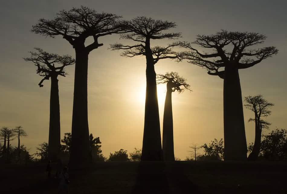 Nella quinta isola più grande del mondo l'85% del mondo vegetale e faunistico è endemico