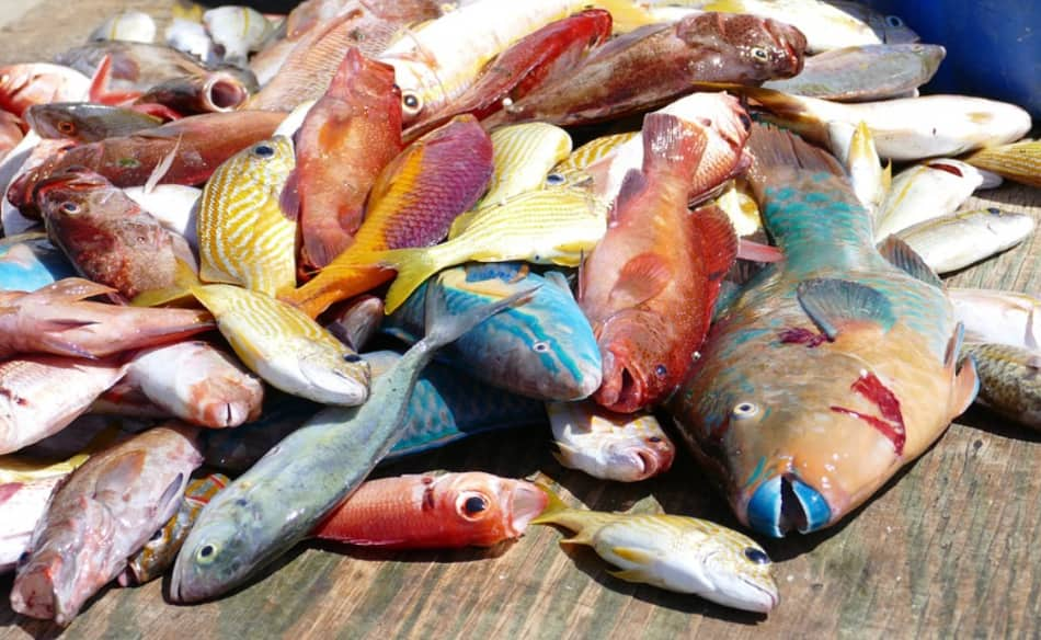 mercati di pesce, piante esotiche e sorgenti sulfuree