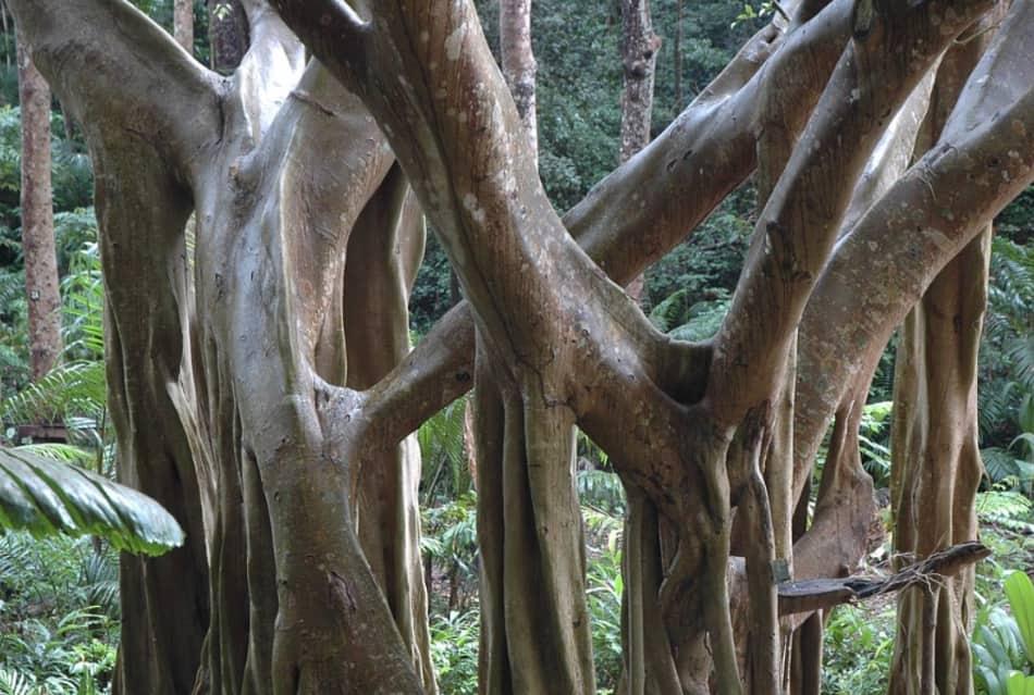 appena là dietro a camminare sotto l'ombra di alberi giganti
